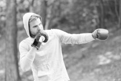 Sharpen defending skill. Sportsman concentrated training boxing gloves. Athlete concentrated face sport gloves practice. Defending skills nature background royalty free stock photos
