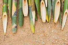 Sharpened bamboo sticks on the ground used for stabbing dracular Stock Image