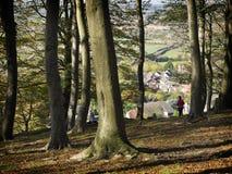 Sharpenhoe-Scharnierventile - altes Waldland Lizenzfreies Stockfoto