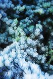 Sharpwhite. Set of small pointy-leaved plants wallpaper Stock Photography