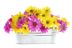Shasta Daisy Flowers in Silver Container Stock Photo