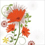Shasta Daisy over Foliage. And design elements Royalty Free Stock Photography
