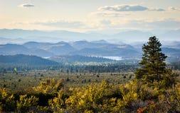 Shasta-Dreiheits-staatlicher Wald lizenzfreies stockbild