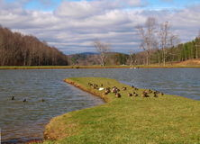 Shatley-Frühlinge Stockfotos