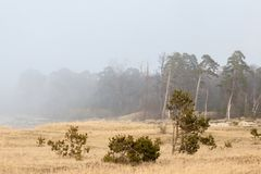 Shattered fors in mist. Latvia The ruined forts of the Carport stand in a baffling mist Royalty Free Stock Photo