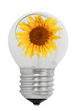 Shattered light bulb and sunflower Royalty Free Stock Photo