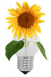 Shattered light bulb and sunflower Royalty Free Stock Photography