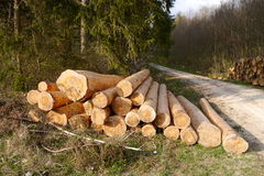 Shaved, barkless logs piled in the black forest Royalty Free Stock Image