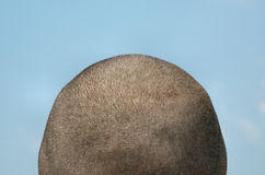 Shaved Head Blue Sky Royalty Free Stock Photography