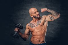 Shaved head sporty male with tattoos on his chest and arms holds. Studio portrait of shaved head sporty male with tattoos on his chest and arms holds dumbbell royalty free stock images