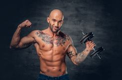 Shaved head sporty male with tattoos on his chest and arms holds. Studio portrait of shaved head sporty male with tattoos on his chest and arms holds dumbbell royalty free stock photography