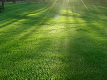 Shaved lawn wants to store heat, collecting rays Royalty Free Stock Photo