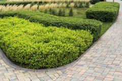 Ornamental bushes decorating flower beds in the landscape. Shaved ornamental bushes decorating flower beds in the landscape royalty free stock image