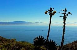 Shaw agawa, Cabrillo Krajowy zabytek, San Diego obrazy royalty free