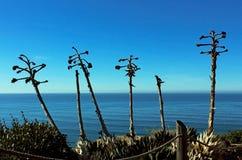 Shaw agawa, Cabrillo Krajowy zabytek, San Diego obrazy stock