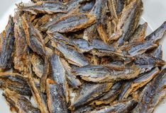 Shawa fish Herring or sardine before cleaning and deboning. Shawa fish Herring or sardine or bonga fish before soaking in boiling water with salt and removal of royalty free stock image