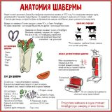 Shawarma ` s解剖学 免版税库存照片