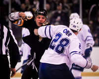 Shawn Thornton, Boston Bruins Fotografie Stock