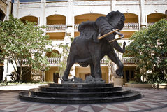Shawu der Elefant - Sun City Stockfotografie