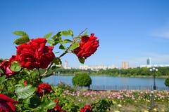 Shcherbakova-Park in Donetsk Stockfotos