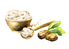 Shea butter in the bowl and nuts. Hand-drawn illustration. Shea butter in the bowl and nuts. Hand-drawn watercolor illustration vector illustration