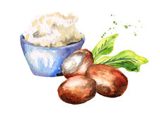 Shea butter and nuts. Hand-drawn illustration. Shea butter and nuts. Hand-drawn watercolor illustration royalty free illustration