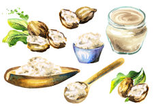 Shea butter and nuts set. Watercolor illustration. Shea butter and nuts set. Watercolor hand-drawn illustration stock illustration