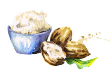 Shea butter and nuts. Watercolor stock illustration