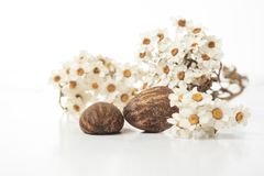 Shea butter nuts and flowers. Shea butter nuts on a white background with flowers. Copy space stock photo