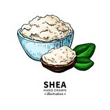 Shea butter vector drawing. Isolated illustration of nuts, butter royalty free illustration