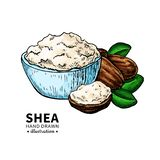 Shea butter vector drawing. Isolated illustration of nuts, butter. Shea butter vector drawing. Isolated vintage  illustration of nuts, butter and leaves. Organic stock illustration