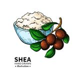 Shea butter vector drawing. Isolated illustration of nuts, butter. And leaves. Organic oil and butter sketch. Beauty and spa, cosmetic ingredient. Great for stock illustration