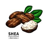 Shea butter vector drawing. Isolated vintage illustration of nuts, butter and leaves. stock illustration