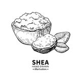 Shea butter vector drawing. Isolated vintage illustration of nuts. Organic essential oil engraved style sketch. royalty free illustration