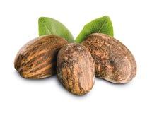 Shea-Nüsse mit Blättern Stockbilder