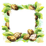 Shea nuts and green leaves square background. Watercolor illustration. Shea nuts and green leaves square background. Watercolor hand-drawn illustration vector illustration