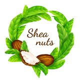 Shea nuts with leaves in vector. Vector shea nuts with shea butter and green leaves in a round border frame isolated on a white vector illustration