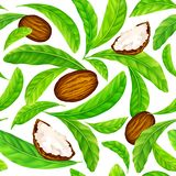 Shea nuts with leaves in vector pattern. stock images