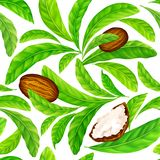 Shea nuts with leaves in vector pattern. Vector seamless pattern of shea nuts with shea butter and green leaves isolated on a white royalty free illustration