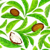Shea nuts with leaves in vector pattern. Vector seamless pattern of shea nuts with shea butter and green leaves isolated on a white vector illustration