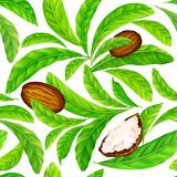 Shea nuts with leaves in vector pattern. Vector seamless pattern of shea nuts with shea butter and green leaves isolated on a white stock illustration