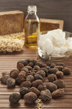 Shea nuts on a natural background Stock Images
