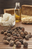 Shea nuts on a natural background Stock Photos