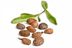 Shea nuts on white Royalty Free Stock Photo