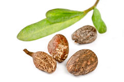 Shea nuts on white. Shea uts with leaves on white background Royalty Free Stock Photography