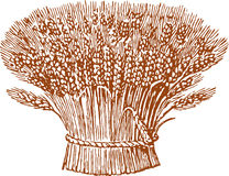 Sheaf. Vector drawing of a sheaf of wheat ears Stock Photography