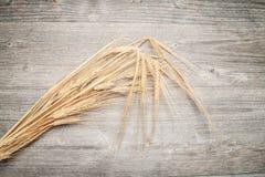 Sheaf of barley Royalty Free Stock Image