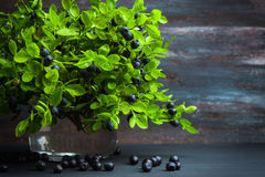 Sheaf of bilberry plant in jar Royalty Free Stock Photography