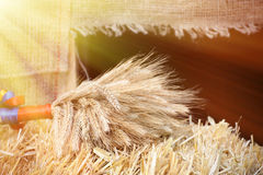 Sheaf of dried ears of wheat. Close-up Royalty Free Stock Images