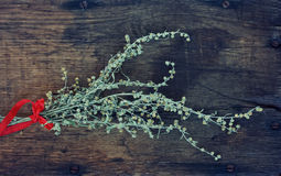 Sheaf of dried wormwood Royalty Free Stock Photos